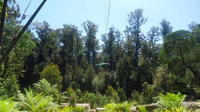 Tahune Forest, Hobart, Australia
