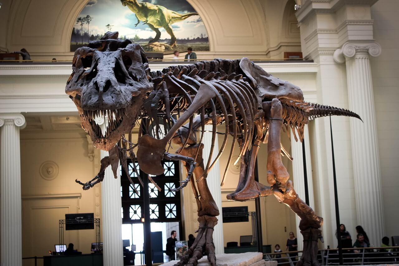 A dinosaur skeleton inside a Chicago Museum: Chicago itinerary