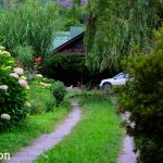 Johnson Orchards: A Delightful Homestay In Manali