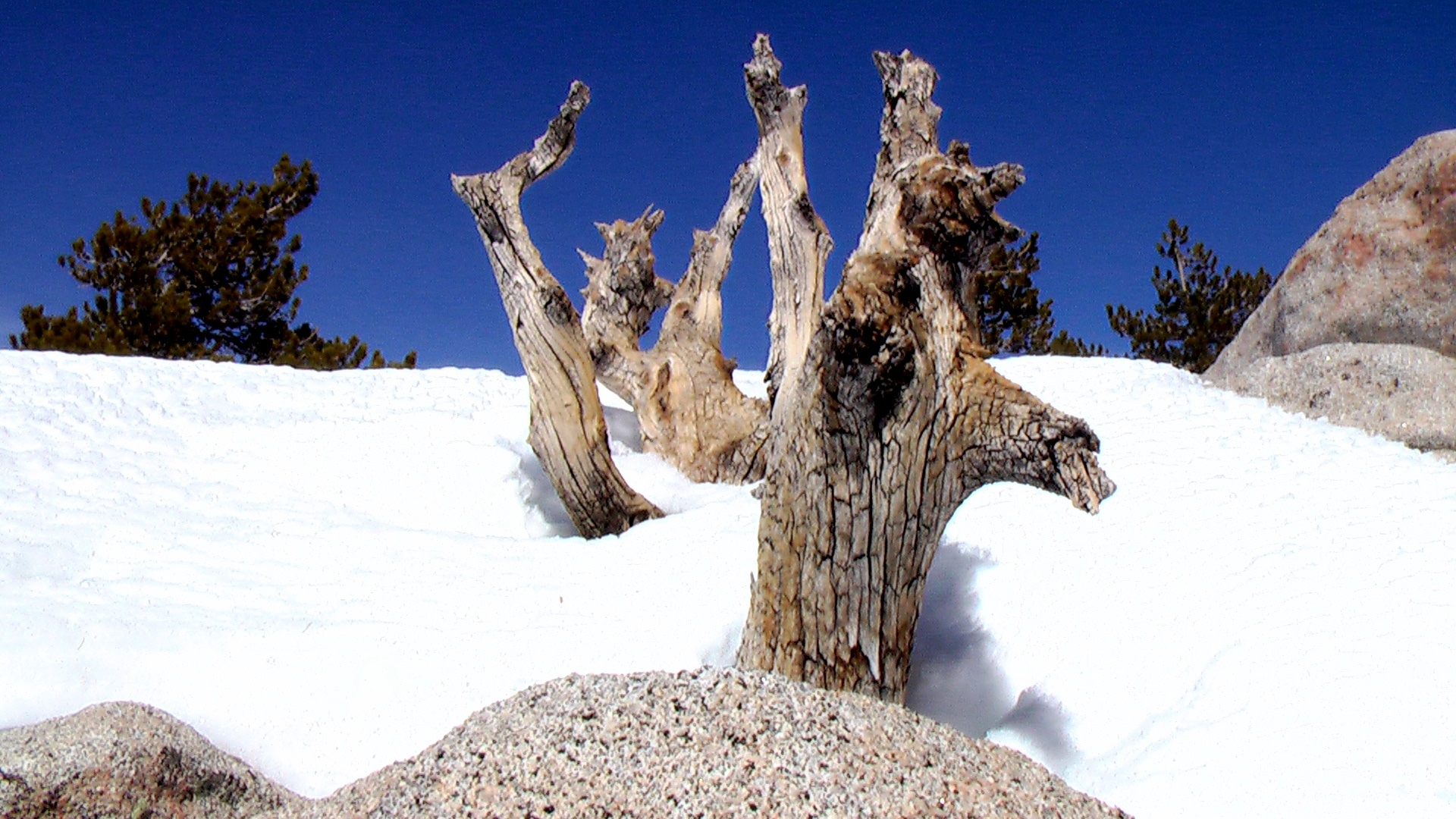 A tree stub surrounded by lots of snow in Palm Springs, California