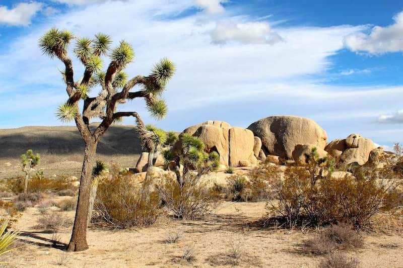 A photo of a desert in Palm Springs, California with some big rocks, few shrubs and a palm tree