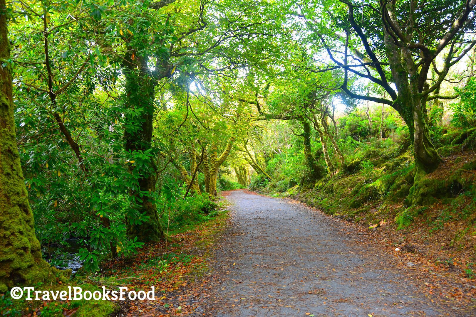 A tropical paradise in Kells, Ireland. Lots of trees surrounding an isolated path