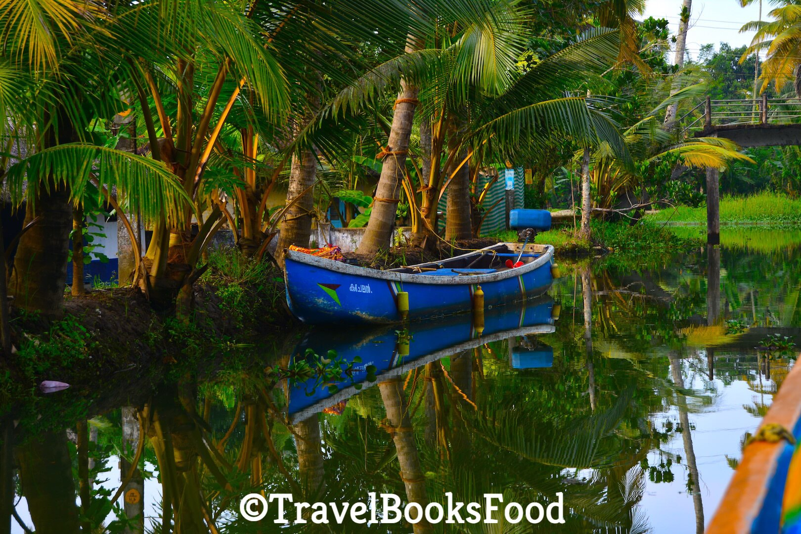 Photo of a blue fishing boat surrounded by coconut trees in Kerala, India