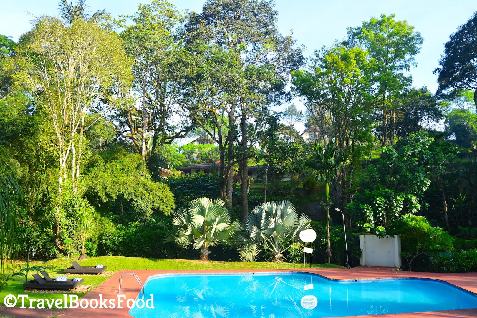 Swimming Pool surrounded by lots of big green trees in Kerala, India