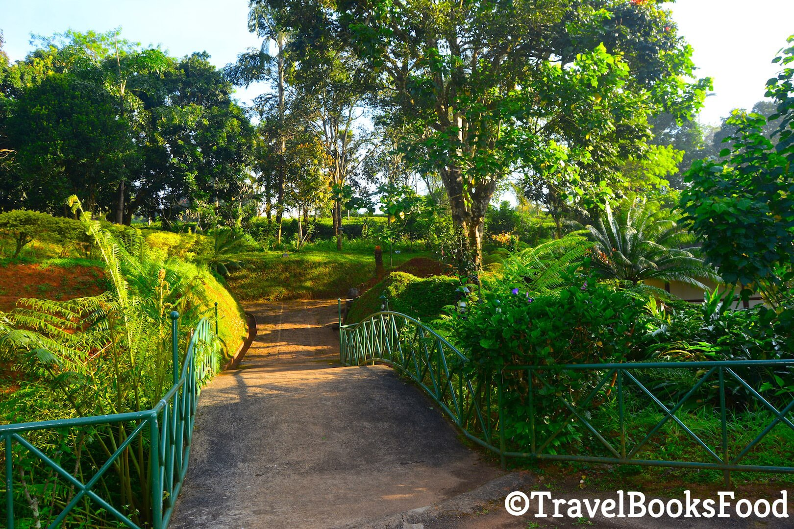 A pathway surrounded by lots of greenery in Kerala, India
