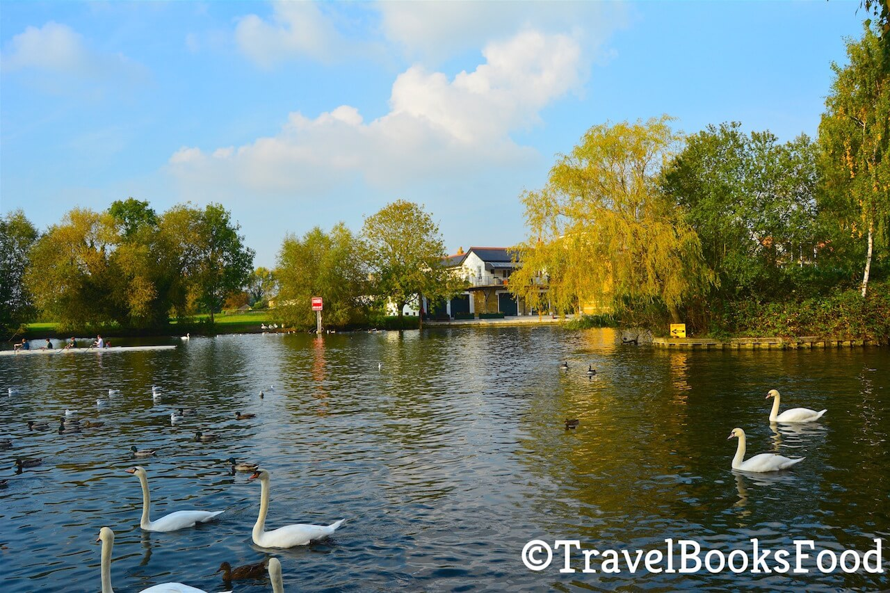 In this picture, you will find a lake with many swans and ducks surrounded by trees in their autumn glory