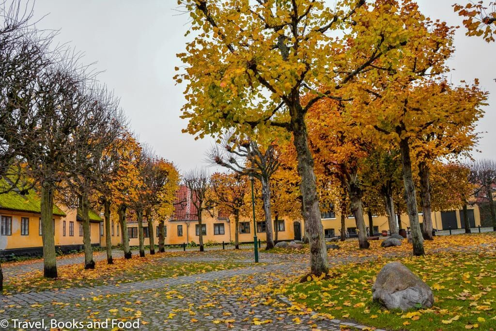 Dragor in Greater Copenhagen full of yellow houses surrounded by trees with yellow leaves.