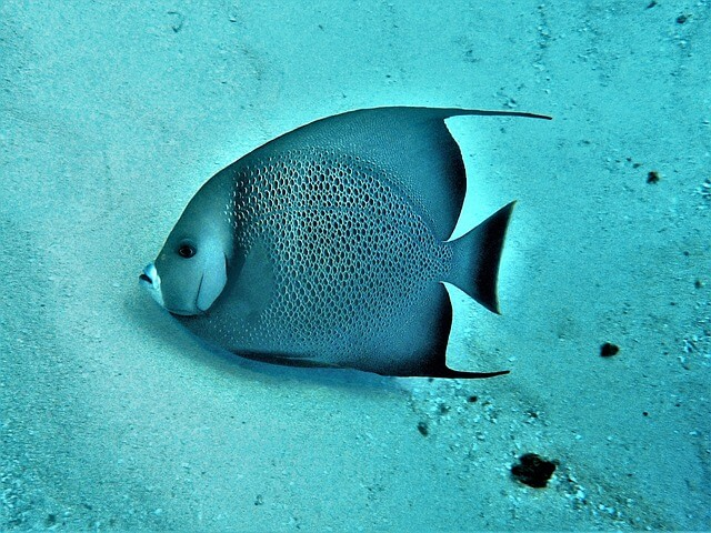 An underwater shot of a fish in Cozumel, Mexico