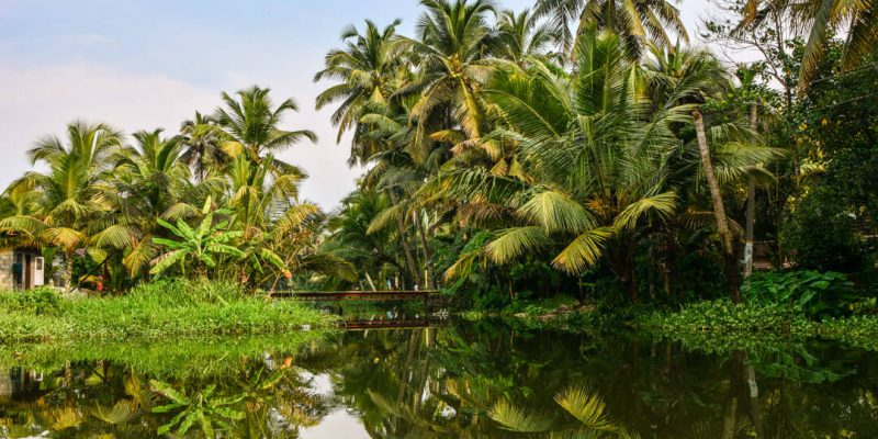 Water surrounded by lots of greenery ; Kerala (Human By Nature)