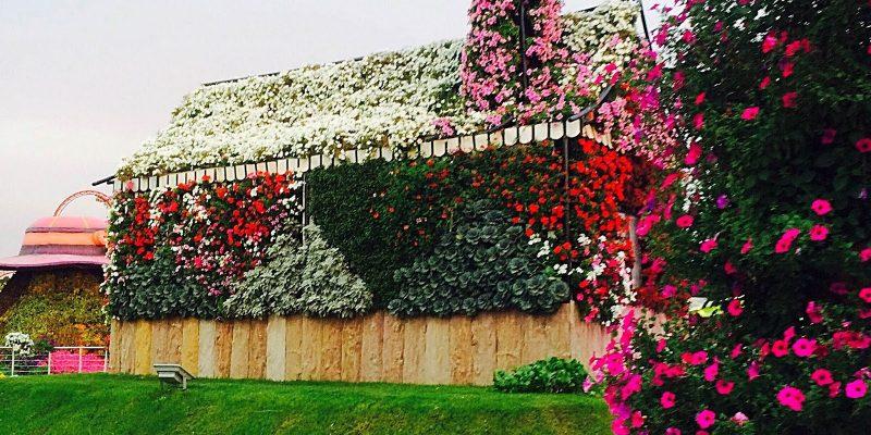 Miracle_Garden_Dubai1