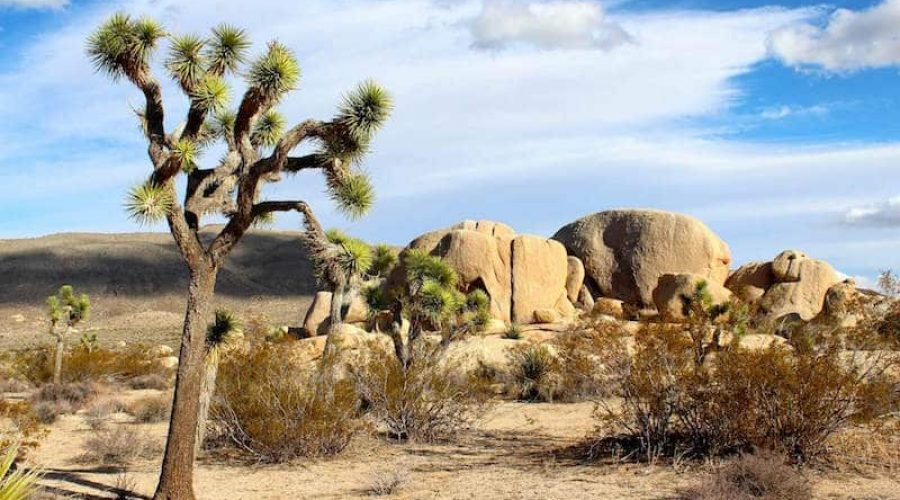 Things I Want To Do in Palm Springs, California