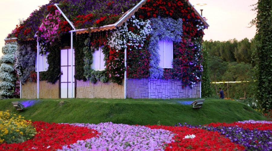 dubai-miracle-garden-1235962_1920